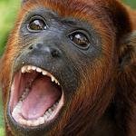 profile image of bbruno