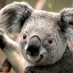 profile image of talo03