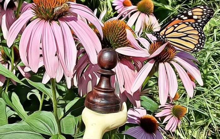 ISCO Honeybee & Butterfly