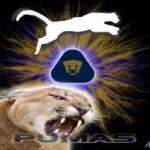 profile image of BCORONA