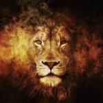 profile image of gokulmani