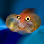 profile image of Babelfish