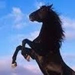profile image of DanielSalas