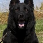 profile image of fredthedog
