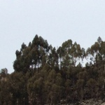 profile image of wiwiwi