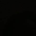 profile image of skipjack