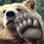 profile image of Bear-Claw