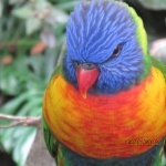 profile image of Nilpferd