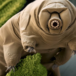 profile image of Waterbear