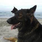 profile image of Boba-Fett