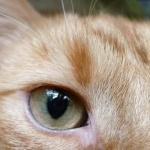 profile image of Woody_der_Kater