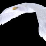 profile image of whiteeagle