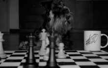 My Dog Plays Chess
