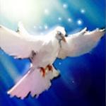 profile image of IsaVulpes