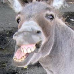 profile image of winker