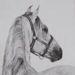 profile image of julianfernando