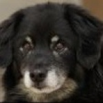 profile image of Snitcher