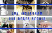Las cuentas de instagram que todo ajedrecista debe seguir (VOL 1)