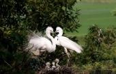 Tablero Educativo (II): Cada oveja con su pareja